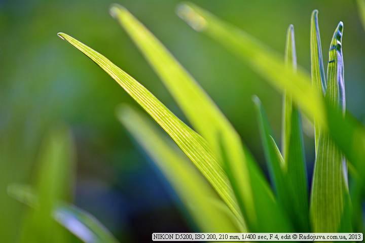Example photo on Nikon D5200