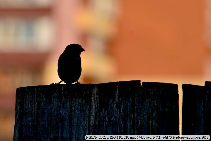 Пример фото на Nikon D5200
