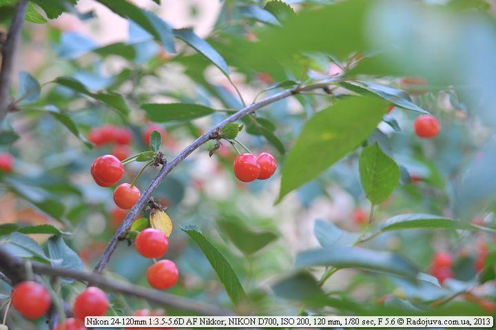 Пример фотографии на Nikon AF 24-120 mm F 3.5-5.6D