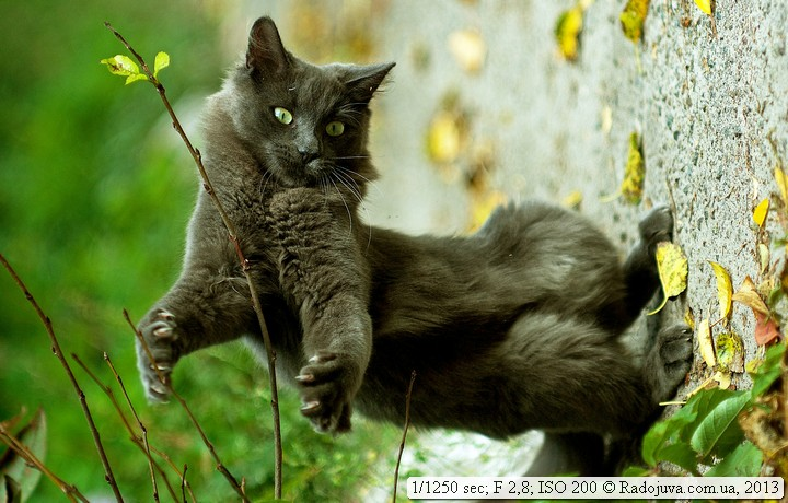 Cheerful cat.