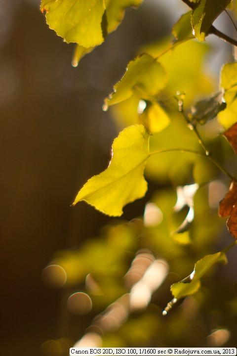 Пример фото на Canon 20D