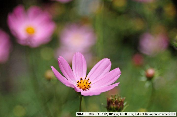 Пример фотографии на Nikon D70s