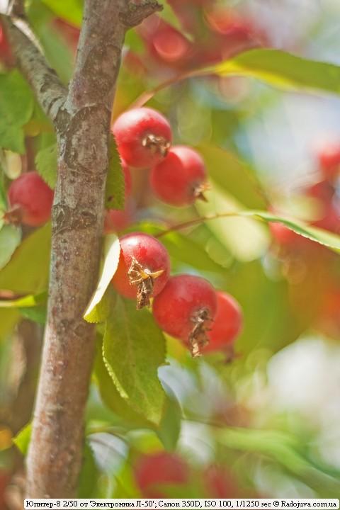 Пример фото на Юпитер-8 от телекамеры. Райские яблочки