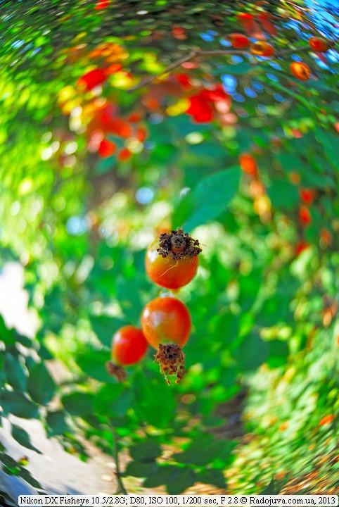 Background on Nikon DX Fisheye 10.5 / 2.8G