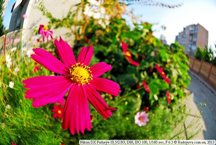 Macro on Nikon DX Fisheye 10.5 / 2.8G-5-mm-fisheye-sample-4