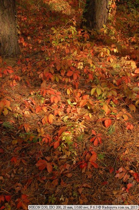 Пример фото на Nikon D50. ББ Тень