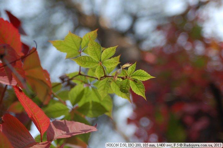 Пример фото на Nikon D50