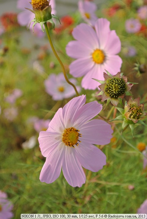 Цветы на Nikon 1 J1