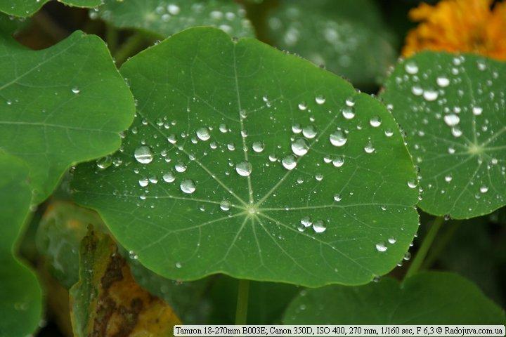 Пример фото. Макро, капли дождя на листике