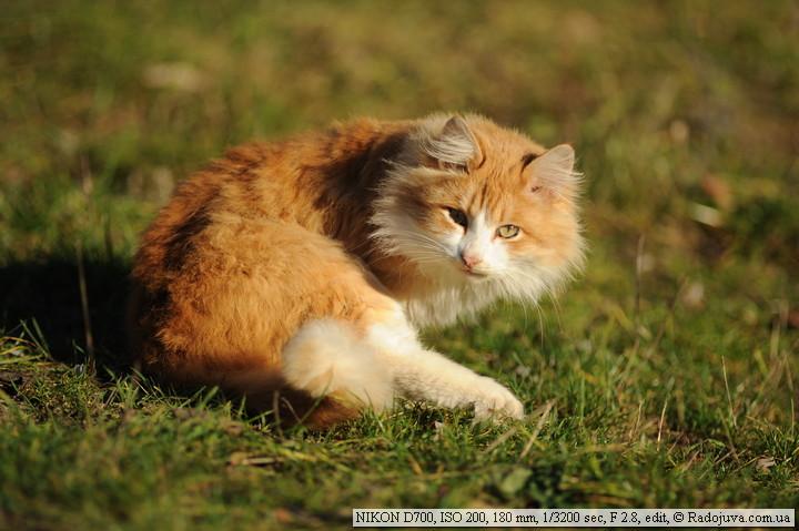 Котик ищет пиксели