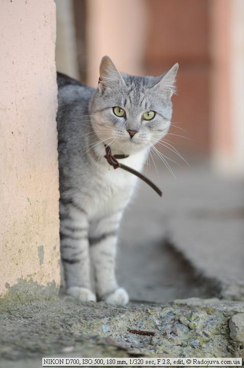 Котик смотрит на мегапиксели как-то недоверчиво