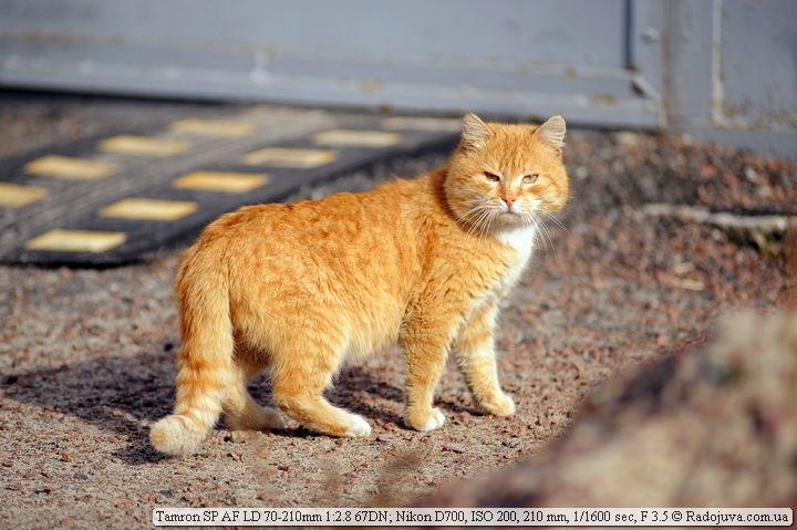 Пример фото. Кот и зимнее солнце