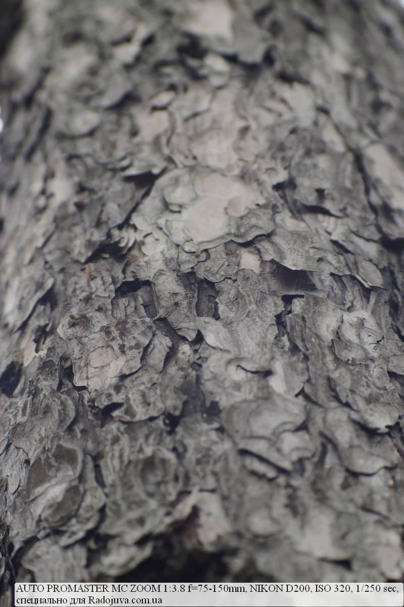 Фрагмент из кадра с контровым светом по краям, видно падение контраста.