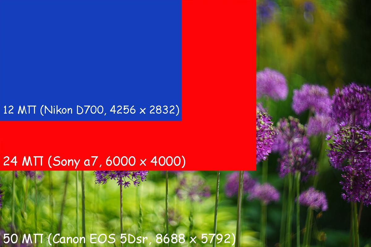 Nikon D700, a7, 5dsr