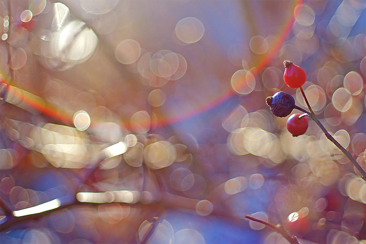 Исходный, уменьшенный снимок с камеры Sony a7II в режиме APS-C
