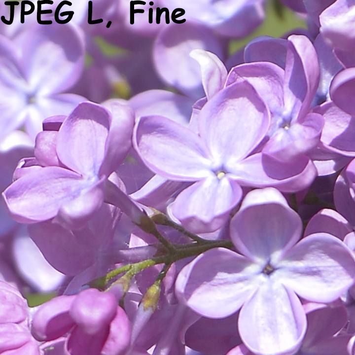 Кроп из накамерного JPEG