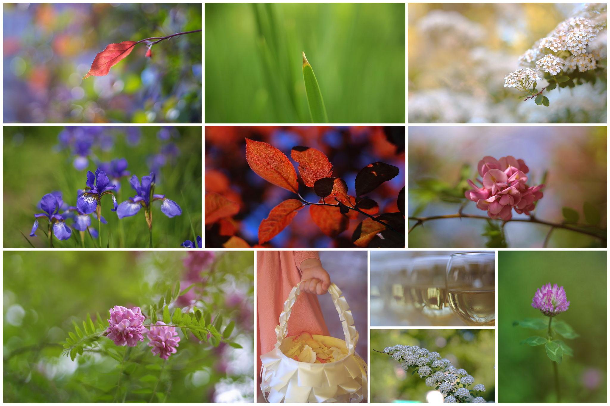 Примеры снимков на Canon EF Lens 50mm 1:1.8 STM можно посмотреть по ссылке. Увеличить.
