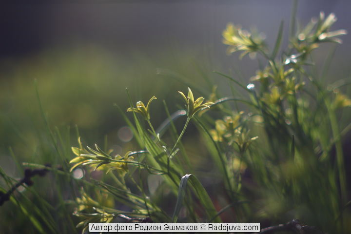 vingetting-article-bokeh-9