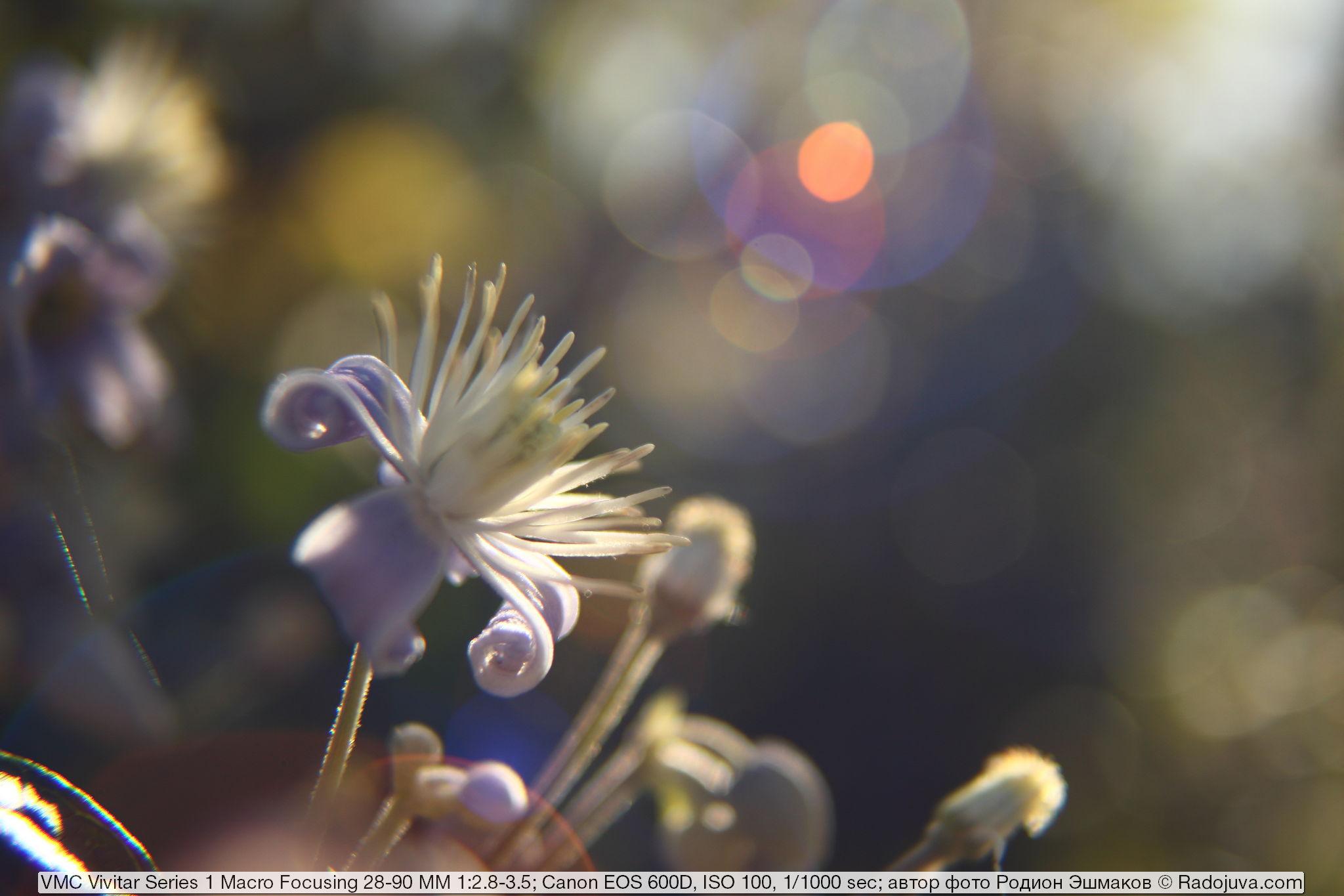 Блики в контровом свете при ФР <35 мм.