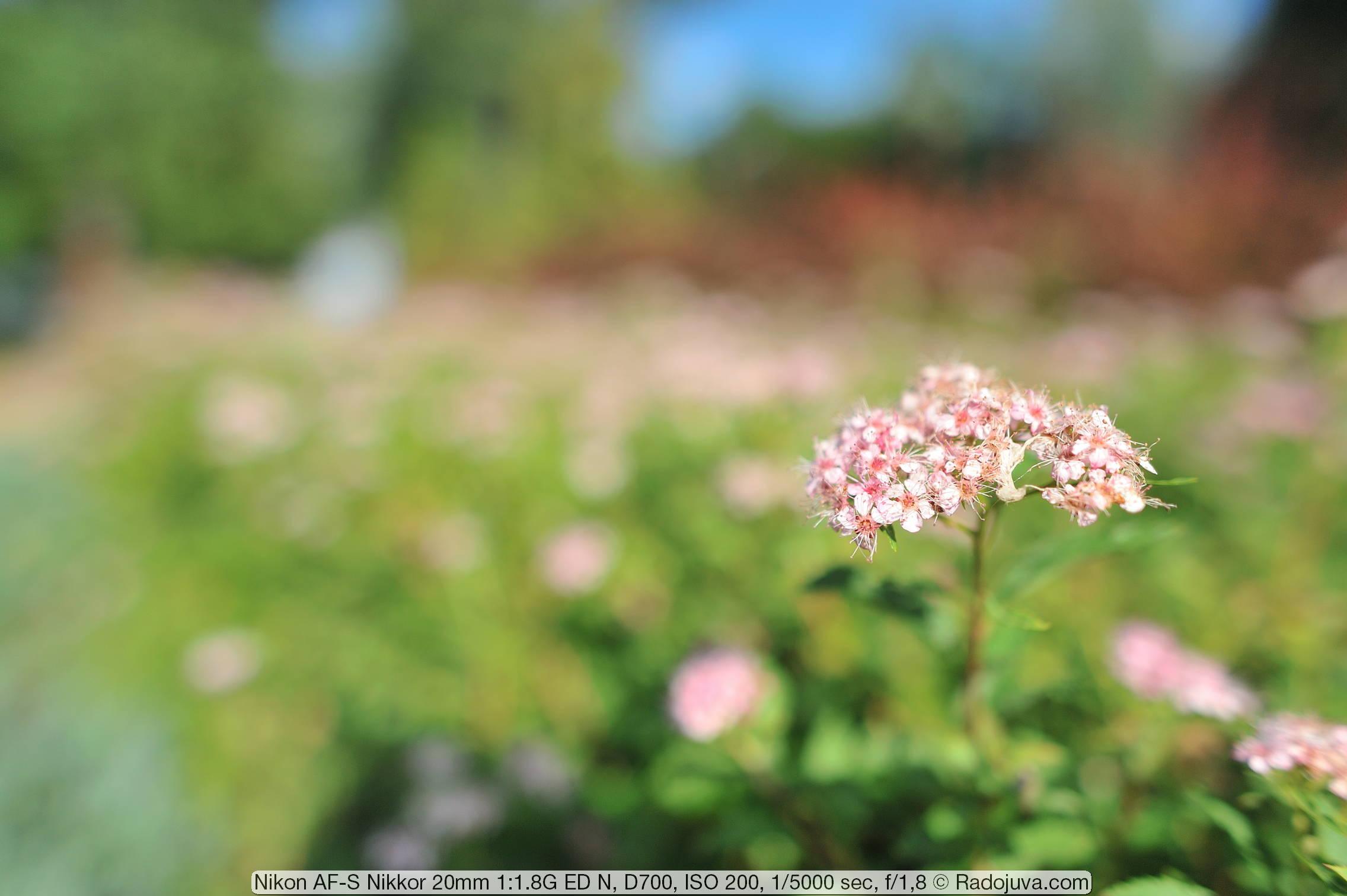 Пример фотографии на Nikon AF-S Nikkor 20mm 1.8G ED N и полнокадровую камеру