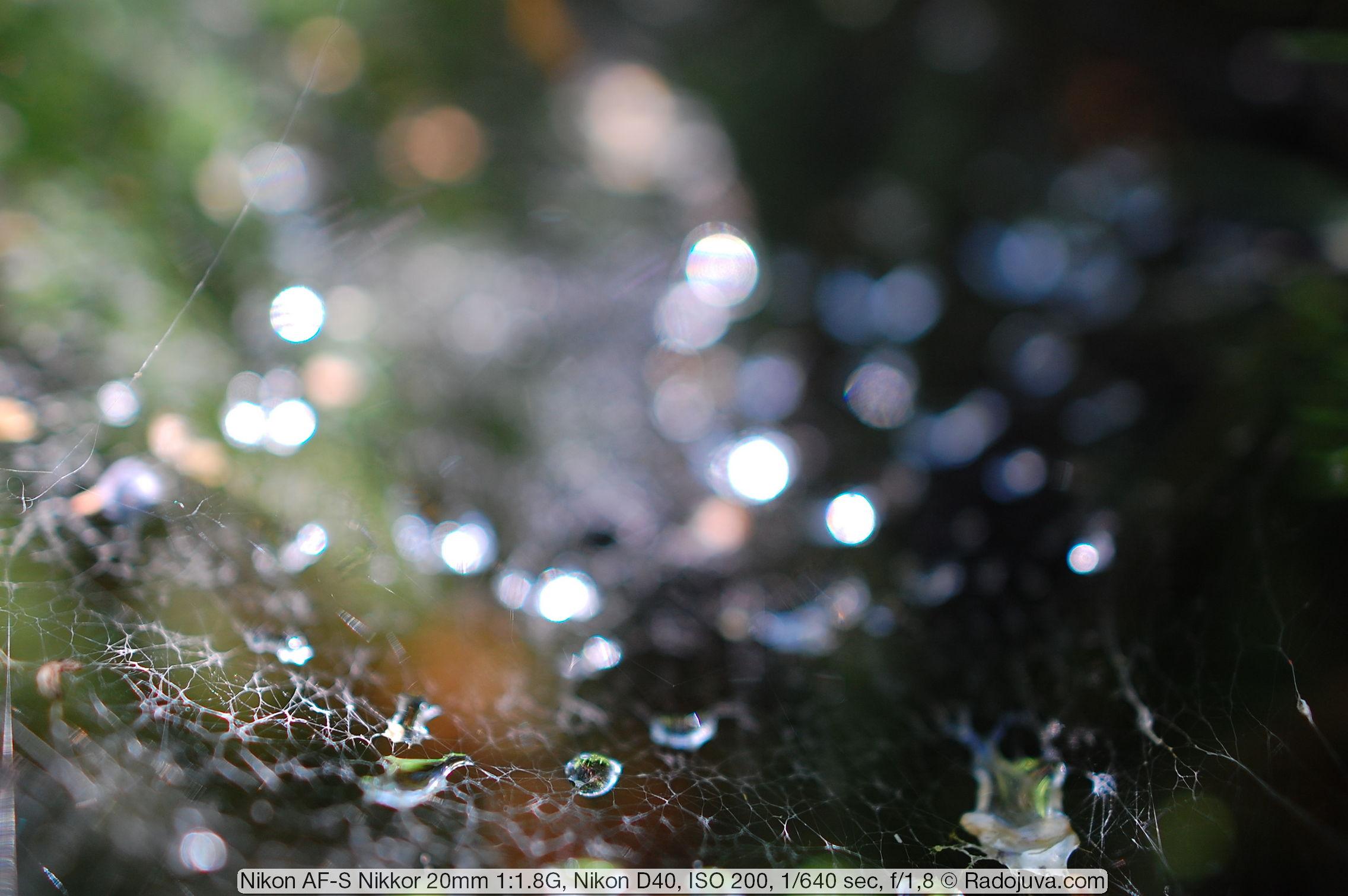 Пример фотографии на Nikon AF-S Nikkor 20mm 1:1.8G ED N