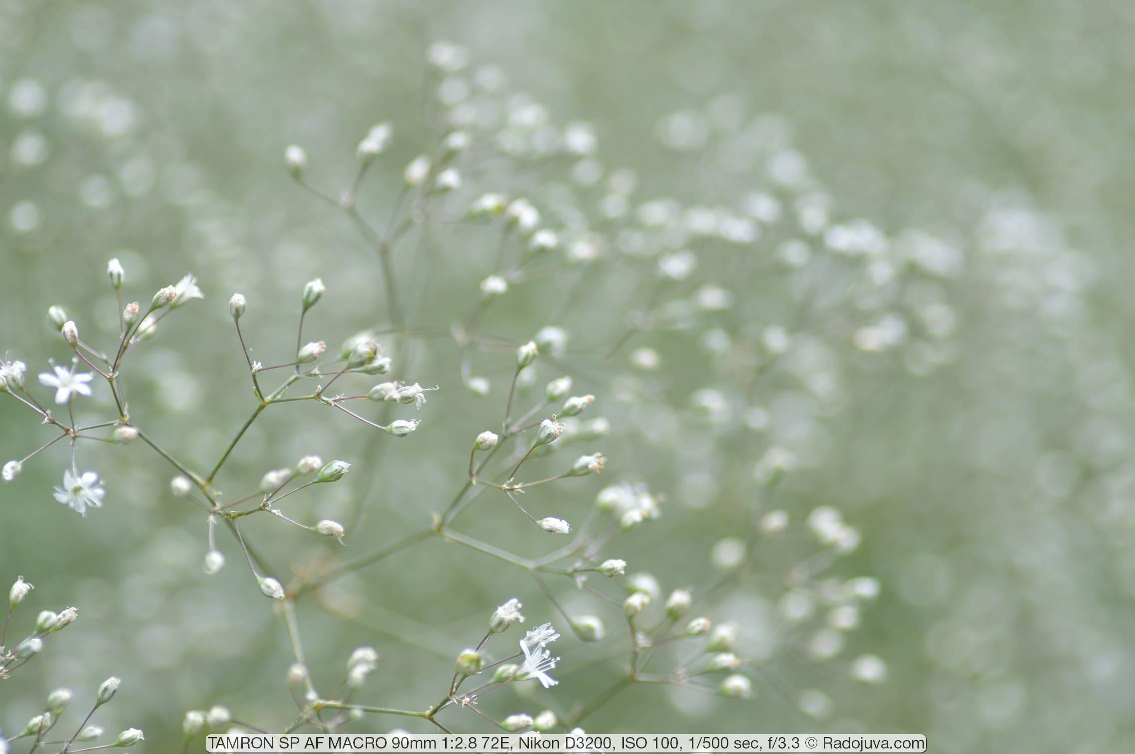 Пример фотографии на объектив TAMRON SP AF MACRO 90mm F2.8 model 72E для Nikon