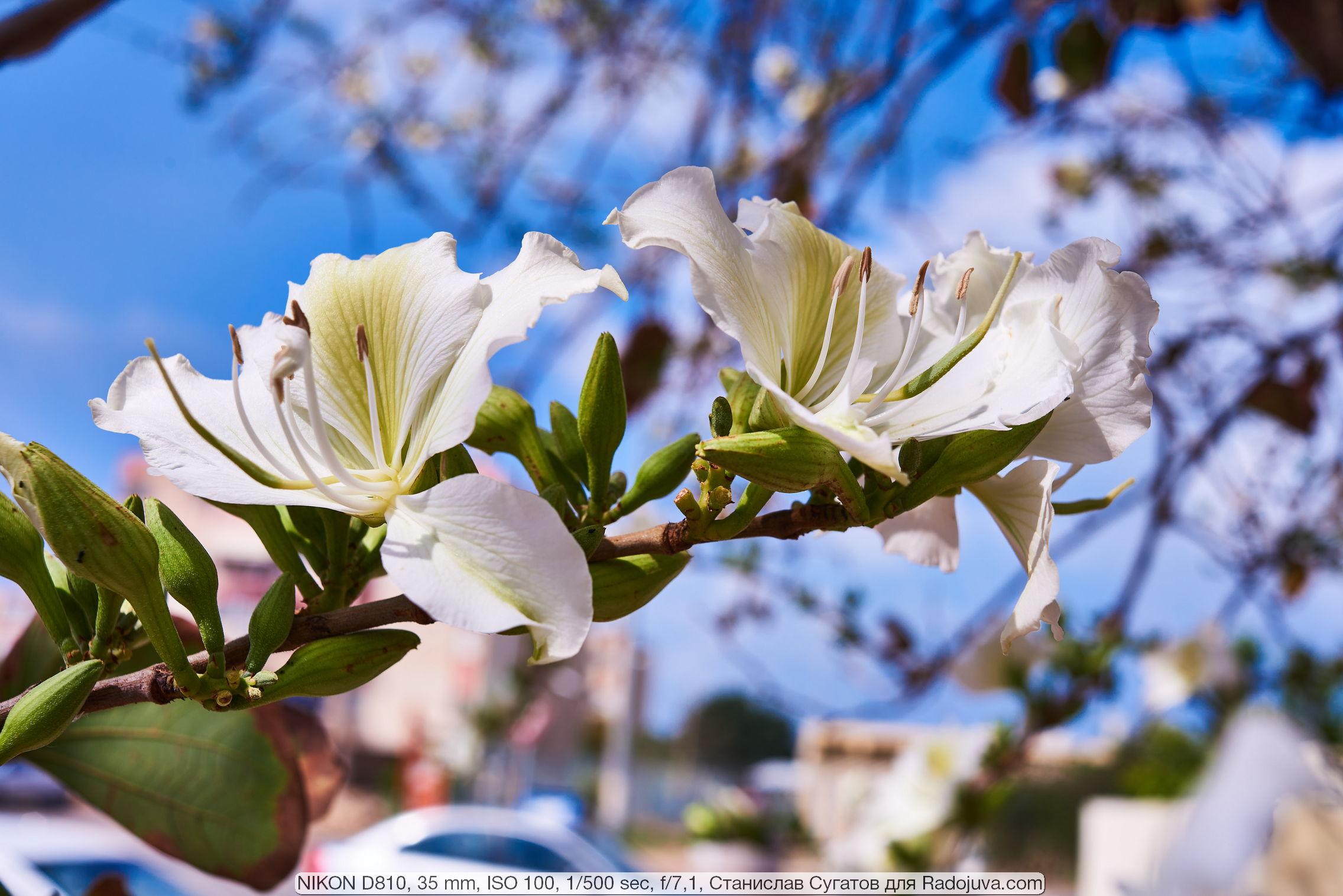 Примеры фотографий на Nikon D810