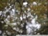 Nikon 10-24 пример фото с полного кадра