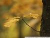 Фото на Canon 1000D