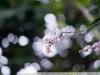 Примеры фотографий на Nikkor 105 mm f 1.8 Nikon