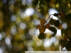 Пример фото на Nikon Nikkor 105 mm F 1.8 AI-S