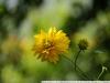 Пример фото на Nikon 18-200/3.5-5.6G