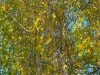 Пример фотографии на SMC Pentax-DA 1: 3.5-5.6 18-55 mm AL