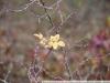 Примеры фотографий на Nikon AF Nikkor 24-85 mm 2.8-4 D