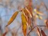 Пример фото на Nikon AF Nikkor 28-70 mm 3.5-4.5 D