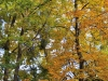 nikon-28-70-mk1-3-5-4-5-best-photo-25