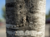 tamron-28-75-di-iii-f-2-8-rxd-samples-8