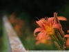 Пример фото на Nikon AF Nikkor 28-85 mm 3.5-4.5 MKII