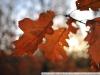 Примеры фотографий на Nikon N AF-S Nikkor 28 mm 1.8 G