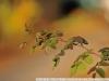 Пример фотографии на Nikon 300mm f/4 ED AF Nikkor боке
