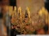 Пример фотографии на Nikon 300mm f/4 ED AF Nikkor боке 3