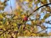 Пример фотографии на Nikon 300mm f/4 ED AF Nikkor яблочко