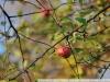 Пример фотографии на Nikon 300mm f/4 ED AF Nikkor еще одно яблочко