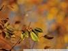 Пример фотографии на Nikon 300mm f/4 ED AF Nikkor листик