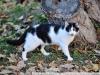 Пример фотографии на Nikon 300mm f/4 ED AF Nikkor кошка
