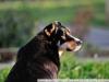 Пример фотографии на Nikon 300mm f/4 ED AF Nikkor собака