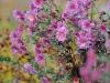 Пример фотографии на Nikon 300mm f/4 ED AF Nikkor цветы