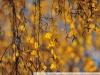 Пример фотографии на Nikon 300mm f/4 ED AF Nikkor береза