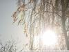 Пример фотографии на Nikon 300mm f/4 ED AF Nikkor засветка