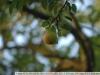if-tokina-at-x-340-af-ii-lens-13